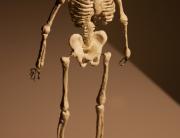 caia,portfoliio,3D-Drawing-of-Skeleton,putty,wire,paper-streamers,유학미술,영국미술유학,미술유학,포트폴리오,카이아