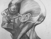 anatomy,pencil,drawing,기초드로잉,foundation,파운데이션,유학미술,미술유학,포트폴리오,카이아